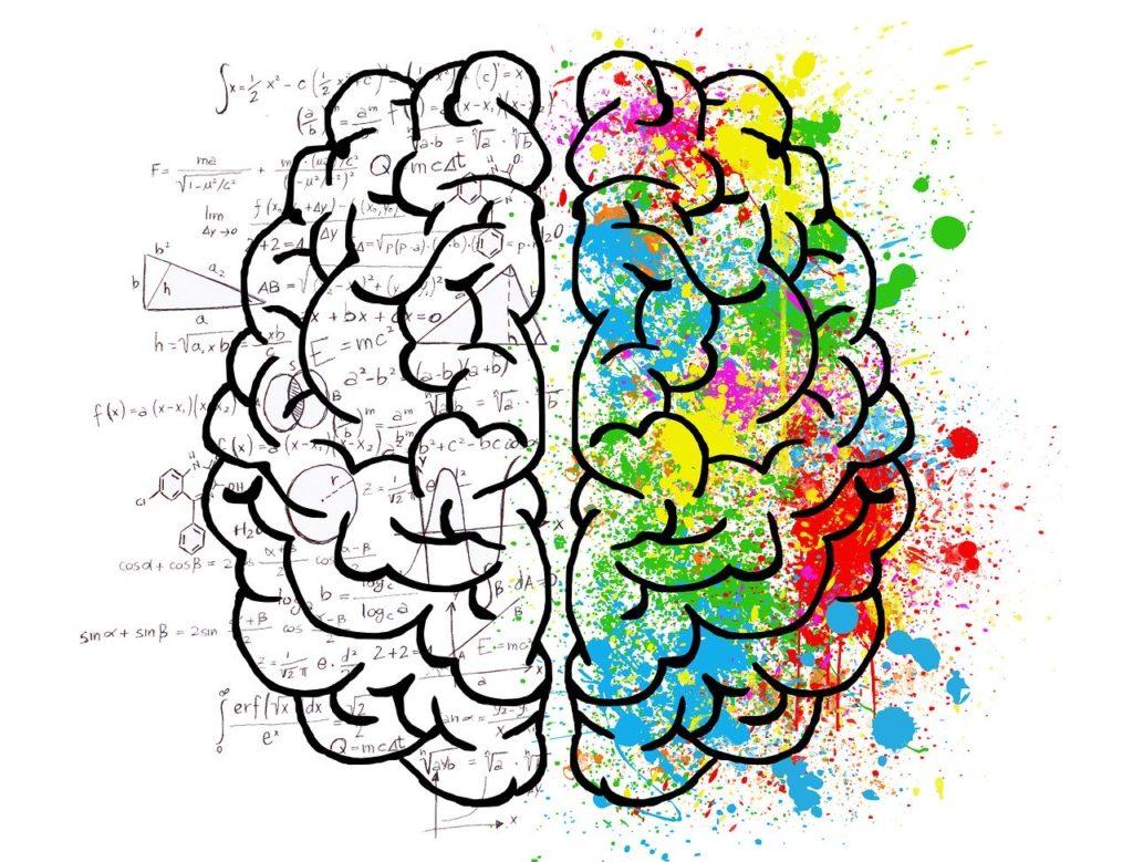 le cerveau fonctionne comme un mandala