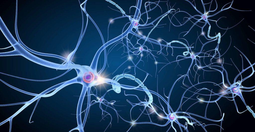 le neurone a la même structure qu'un mandala